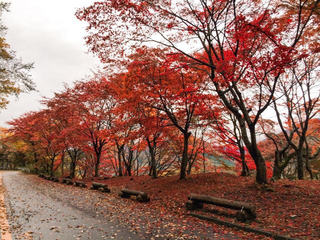 Trip to Nasu, Nikko, Aizu – 紅葉の季節